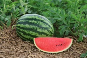 8 ข้อดีของแตงโมตามคำกล่าวของนักโภชนาการ